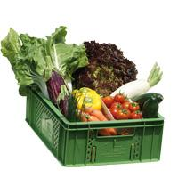 Querbeet-Gemüsekiste