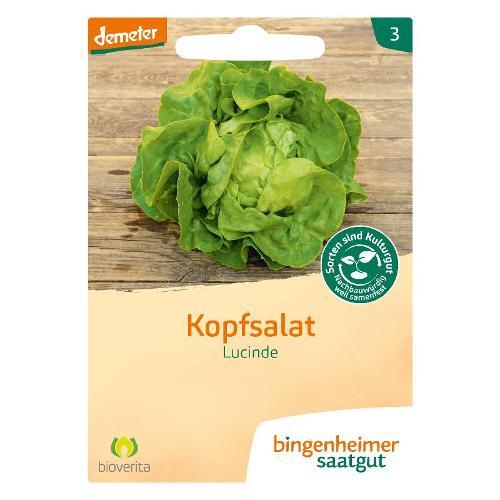 Samen: Kopfsalat Lucinde