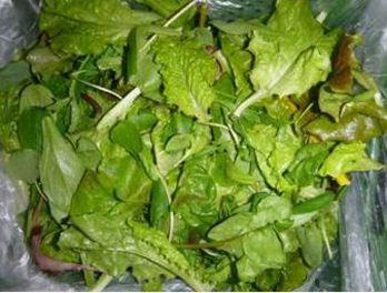 Baby Leaf Schnittsalat
