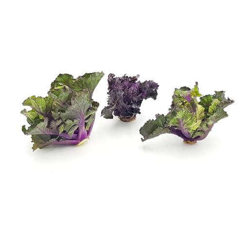 Flower Sprouts, 180g von Engelhardt