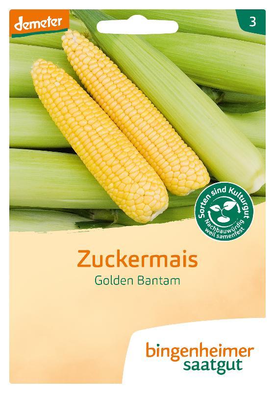 Saatgut Zuckermais Golden Bantam von Bingenheimer Saatgut