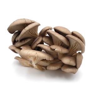 Austernpilze in der Schale