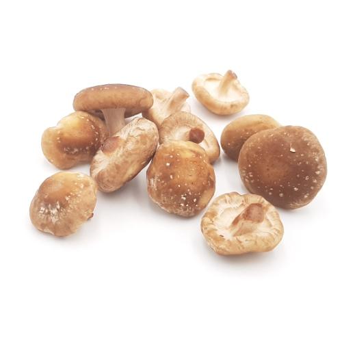 Shiitake Pilze von Pilzgarten, ca. 200g