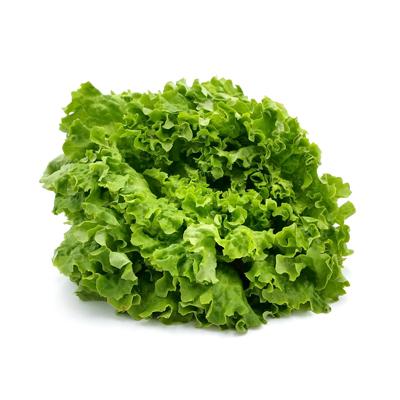 roter Batavia-Salat von Speckhan