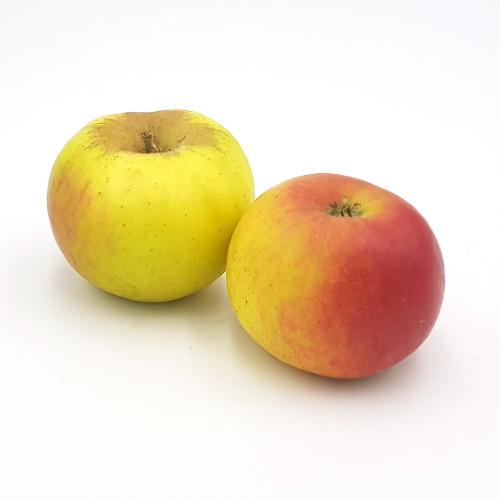 Äpfel Ribston Pepping von Cordes