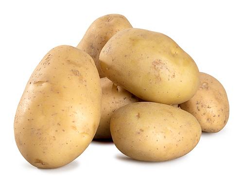 Frühkartoffel Solist fk 1,5kg