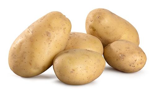 Frühkartoffel Sieglinde fk 1,5kg
