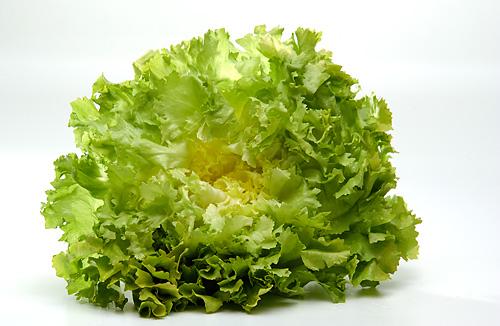 Salat - Endivie