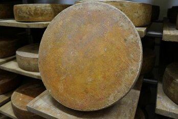Pellwormer Rungholt Käse 12 Monate