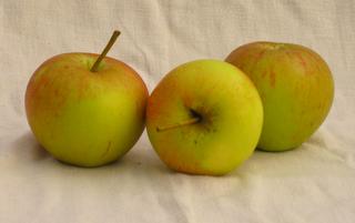 Apfel - Fiesta