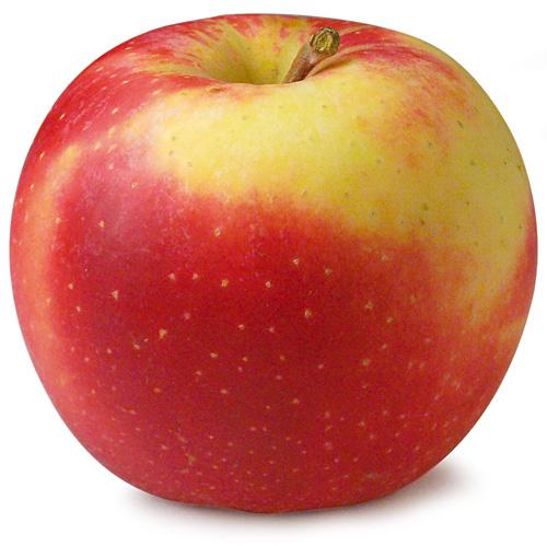 Apfel - Elstar