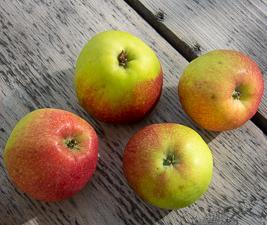 Apfel - Collina