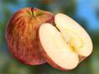 Apfel - Delbard Estivale