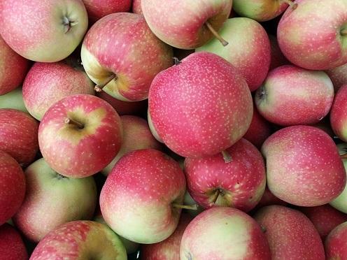 Apfel - Summer Red