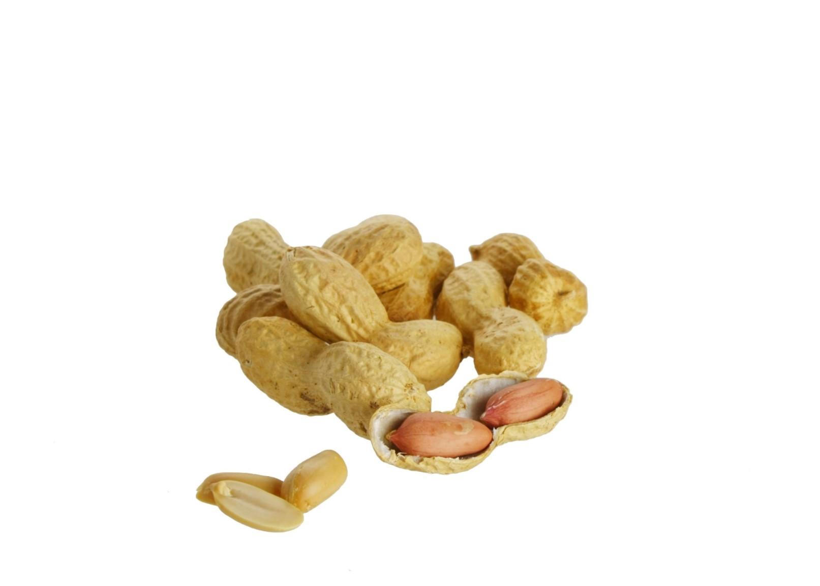 Erdnüsse i. der Schale, geröstet