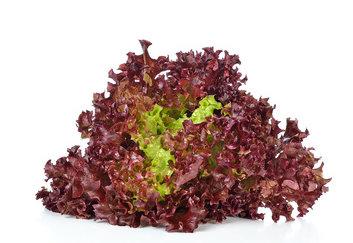 Salat - Batavia rot