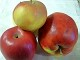 Apfel - Rosana