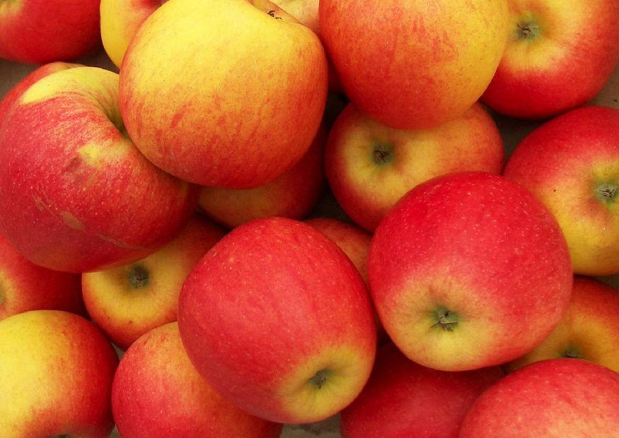Apfel - Pinova